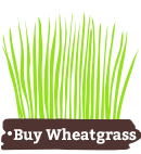 buy wheatgrass
