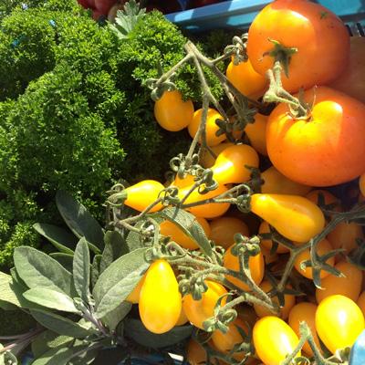 herbs-tomatoes